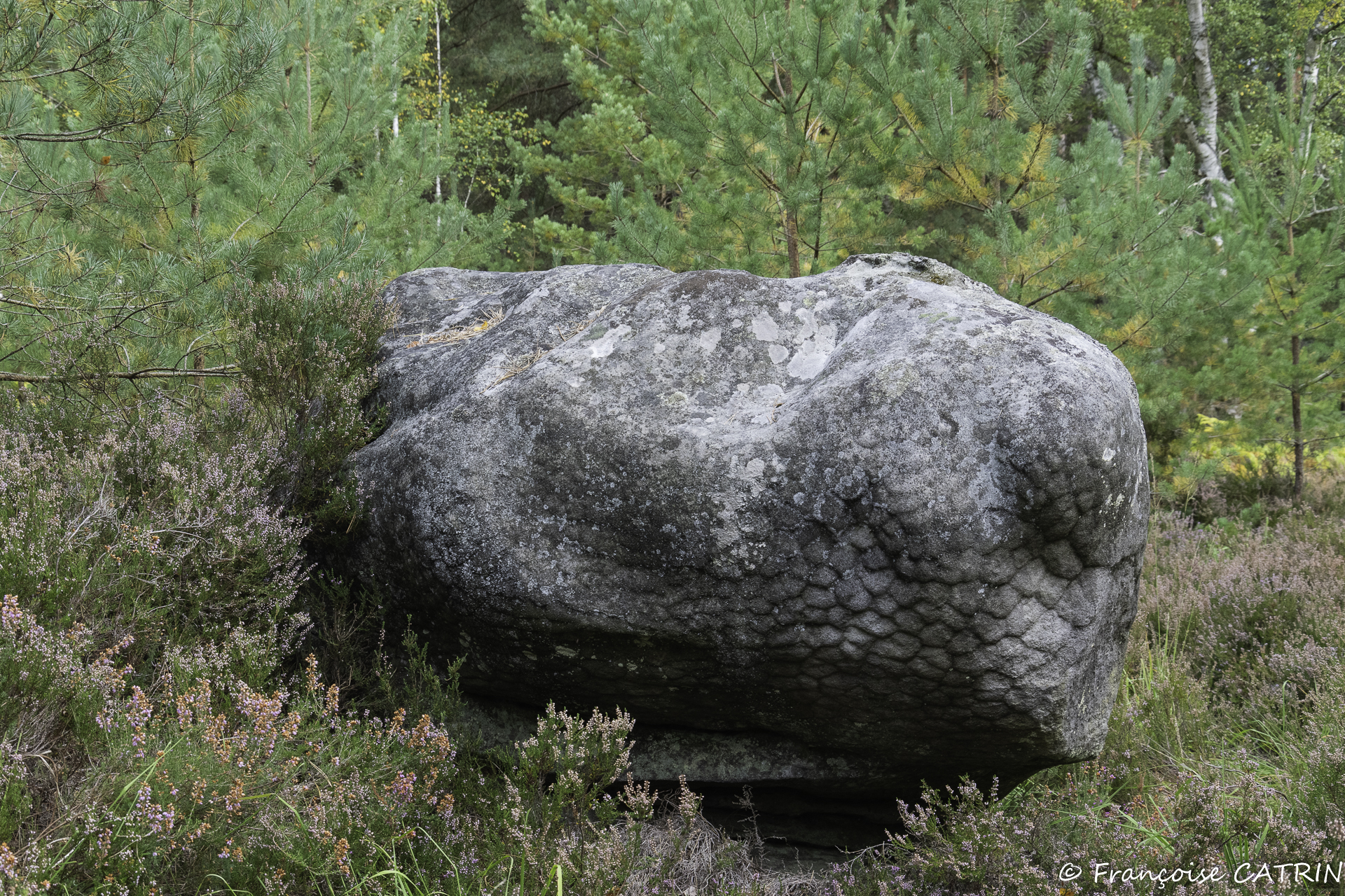 1209-205 (9)