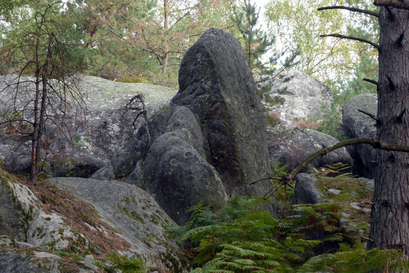 1209-205a (5)